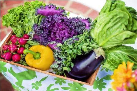 analisis de residuos de pesticidas