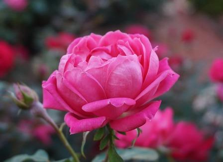 analisis foliar en floricultura