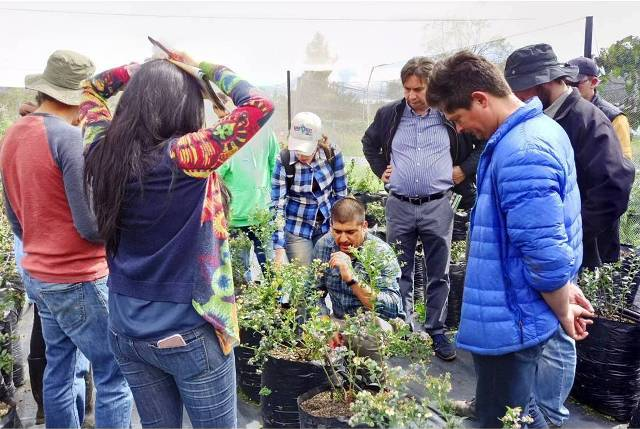 cultivo de arandano en Colombia