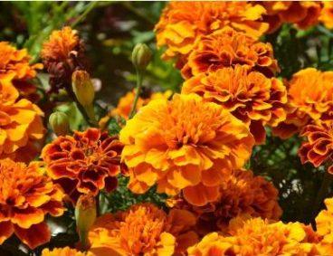 Análisis foliar en cultivo de flores