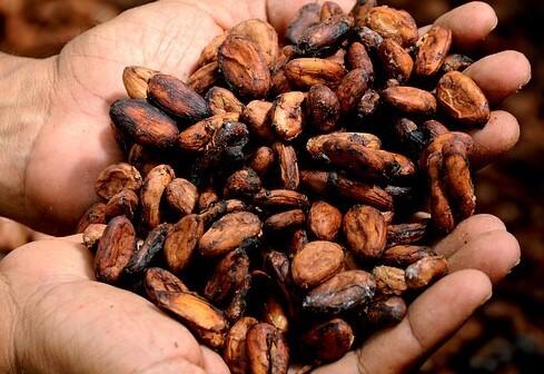 Análisis de metales pesados, Cadmio en Cacao