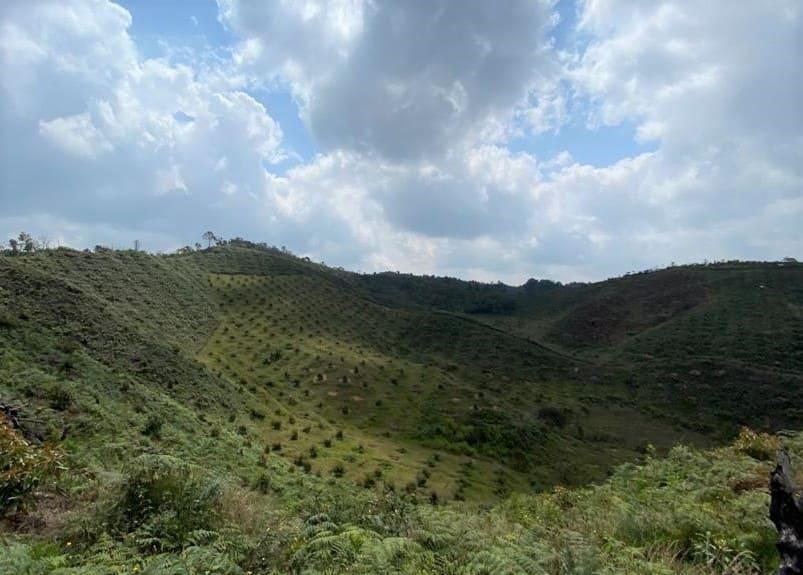 Fertilizar tras el verano cuando y cuanto Colombia